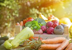 alimentation-vivante-energie-vie-soleil